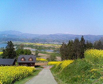長野県飯山「菜の花祭り」