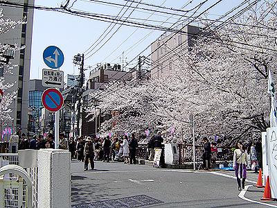 中目黒桜祭り